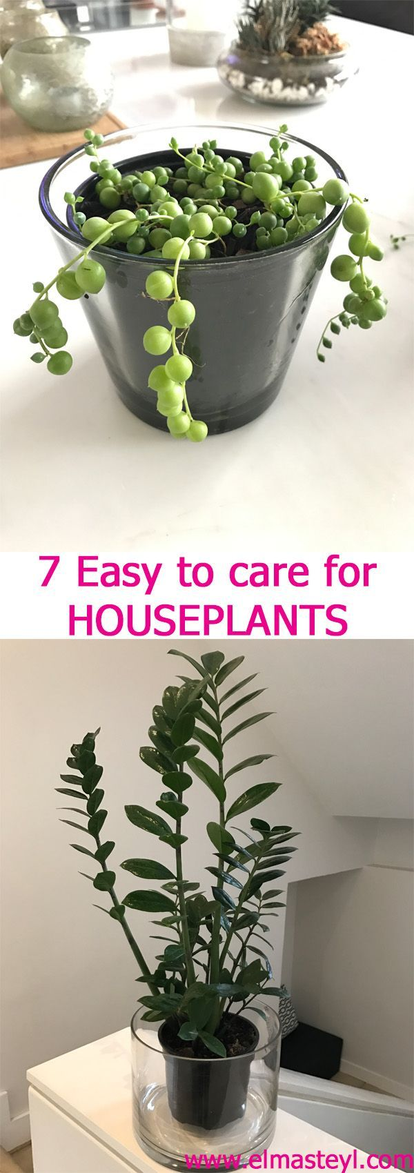 Read more about these easy to care for Houseplants on the blog...
