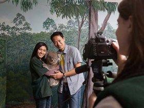Cleland Wildlife Park - Koalas