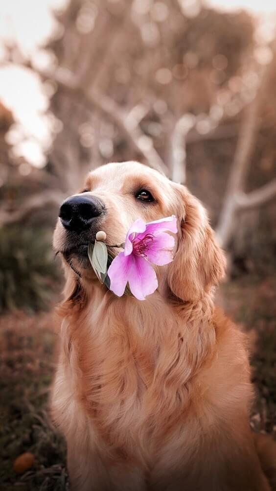 Why Do Female Dog Hump?