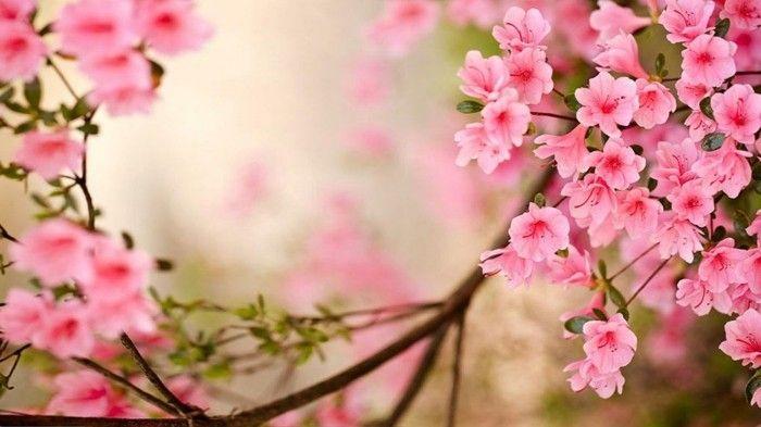 fond ecran printemps fleurs printemps