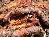 Four Easy Do-It-Yourself Soil Tests