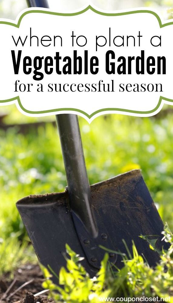When to Plant a Garden - Here are 3 things you need to know!