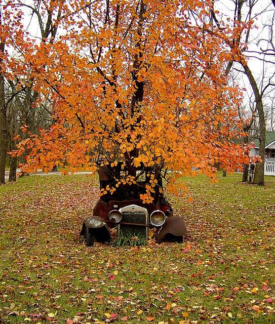 Car tree, via Flickr.