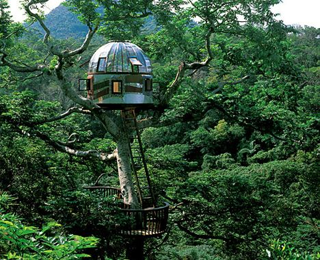 This is the Fun! portion.  I have an undying love for tree houses, the weirder the better.  This one has a glass, see-thru floor.