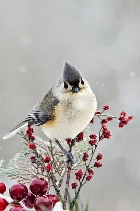 Mejores 50 imágenes de pajaros en Pinterest | Pájaros bonitos, Aves ...