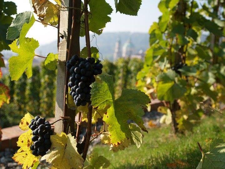 Villa-Richter-Vineyard-Tres-Bohemes