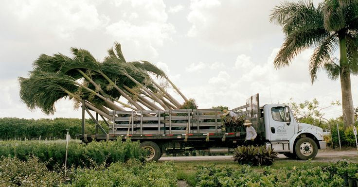"""南国情緒溢れた観光地のヤシの木やサボテンは、実は巨大な農園で""""生産""""されている。トラックに積み込まれ整然と並べられたヤシの木を写真家が追跡。その姿は、まるで野菜かなにかのようだ。"""