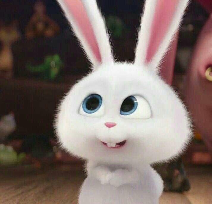3840x2160 The Secret Life Of Pets 4k Picture Hd Desktop Bunny Wallpaper Pets Movie Rabbit Wallpaper
