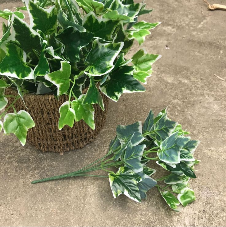 5 fork white side sweet potato leaves Artificial plastic grass fence Outdoor plant wall grass decoration plant bonsai