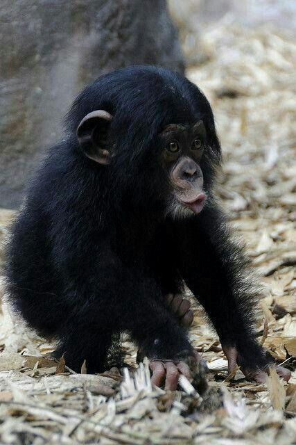 Monkey lips.   Cute animals   Pinterest