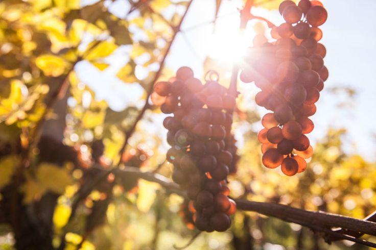 Herbstzeit ist Besenzeit… Es ist wieder soweit: Nach dem bierlastigen Cannstatter Wasen wird in Stuttgart und Umgebung wieder die Zeit der Weine eingeläutet! Mit Kehrwoche hat das recht wenig…