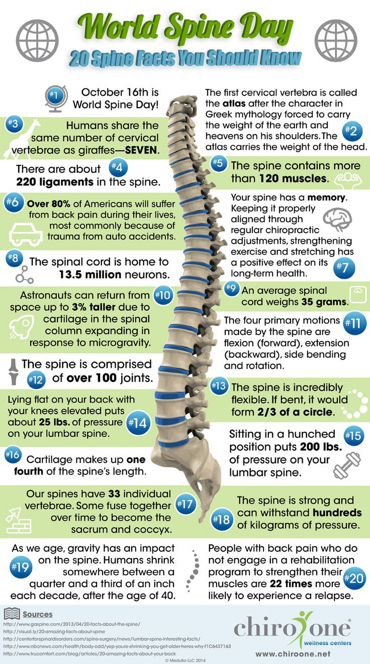 20 fun facts to learn in celebration of World Spine Day- Bradley chiropractic Inc (323)872-0609 Hollywood, ca
