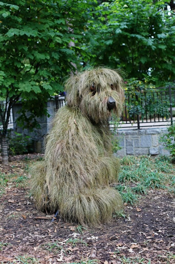 Atlanta botanical gardens shaggy dog topiary - had to look twice as I thought this was a real dog!