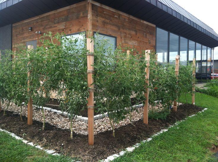 Raspberry Trellis System Gardening Pinterest Trellis
