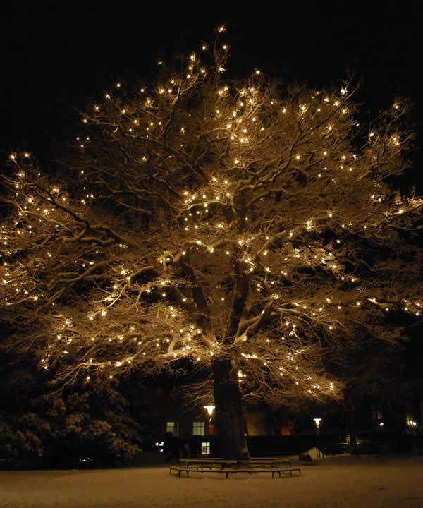Big Christmas Tree Lights: CHRISTMAS, SNOW, LIGHTS, TREE, NIGHT, PARK CHRISTMAS TREE