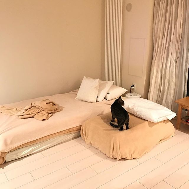 ようやく洗濯屋さんから 布団が返ってきたよー🙌😸😄 まこのベッド🛏もママのベッド🛏も 出来上がりーっと🙌😸😊 やったー✨🙌😸 やったー✨🙌😄 また並んで寝ましょーね。🛌🛌 #猫#ねこ #ねこのいる生活 #猫との暮らし #かわいい猫 #ねこ部 #ねこすたぐらむ #cat #catlover #愛猫 #catsofinstagram #catstagram #ねこあつめ #ねこら部 #かわいいねこ #ねことの暮らし #猫と暮らす #ilovemycat #ネコ#ネコ部 #猫部 #猫好き#ねこ好き #カメラ女子#加工なし #nofilter #写真部 #catphoto #猫ベッド #快適