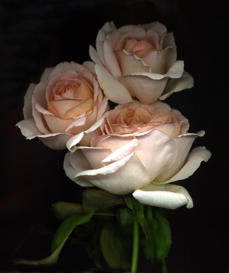 """when i speak to you i speak as though i am offering a rose in your hand.""  ― Sanober Khan"