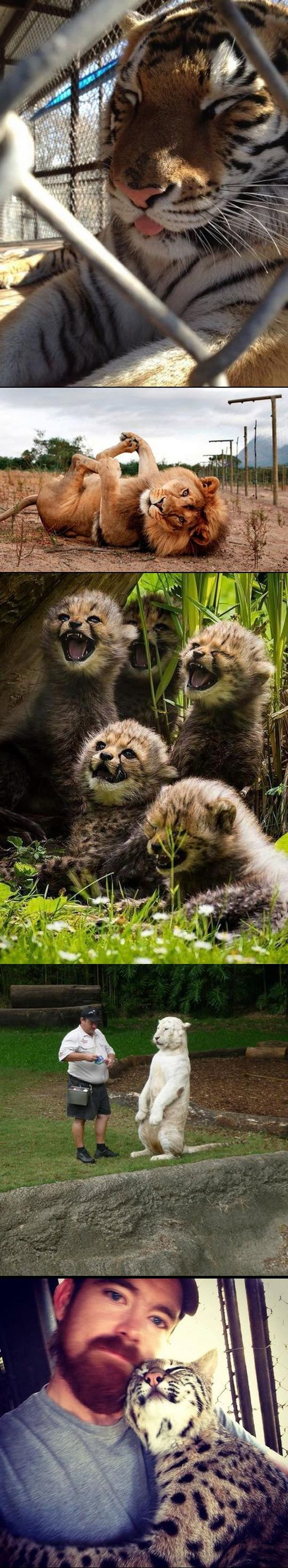 Geeky photographers show that big cats just want to have some fun.