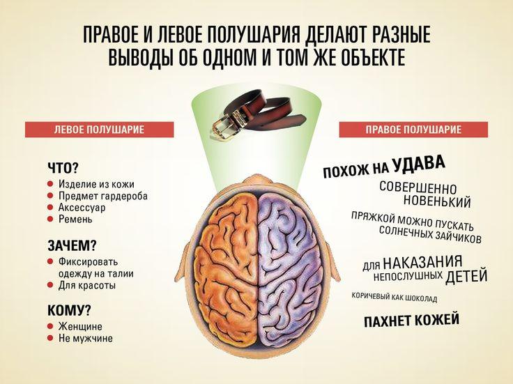 Какое полушарие мозга у Вас доминирует?