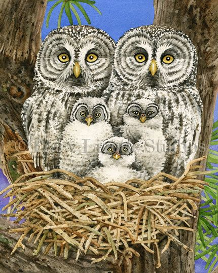 This watercolor features a majestic Great Grey Owl family in this big pine tree.  TITLE: Owl Tree with Great Grey Owls ARTIST: Tracy Lizotte MEDIUM: Giclee Print  DIMENSION DETAILS: 5x7 in. (12.7x17.8cm), actual paper size, 5.25x7.25 in (13.3x18.4cm) 8x10 in. (20.3x25.4cm), actual paper size, 8.5x11in (21.6x27.9cm) 11x14 in (27.9x35.6cm), actual paper size, 11.25x14.25 (28.6x36.2cm)  SPECIFICS This is an archival fine art giclee print of the original watercolor painting. Its recreated on…