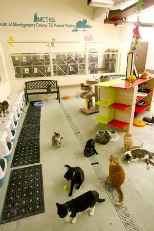 Cats get new place to play at shelter, with ceiling cat highway too! #cats #shelter // Good idea for a cat/kitten room.