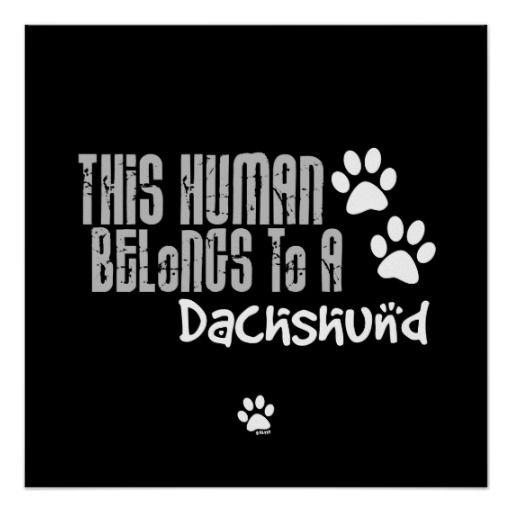 Este ser humano pertenece a un Dachshund Póster