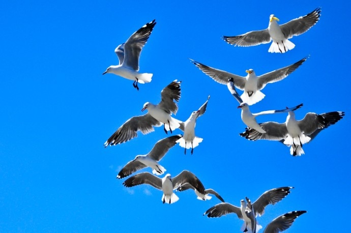 Seagulls at Hout Bay, Cape Town