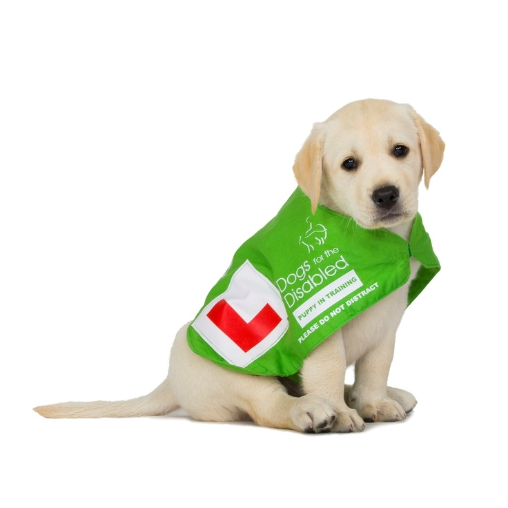 Contact our regional centres http://www.dogsforthedisabled.org/contact-us/regional-centres/
