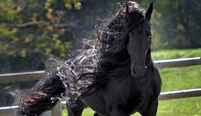 Kevés olyan teremtés van a világon, amelynek megjelenése, kisugárzása annyira fenséges, mint a lóé. Az erő, a szabadság szimbólumi, és ráadásul...