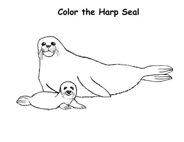 Coloring Pictures Of Harp Seals Yahoo Image Search Results