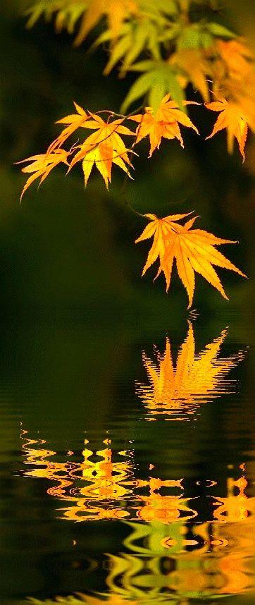 Reflections of Fall Color-                      Sensibilidade do fotógrafo!
