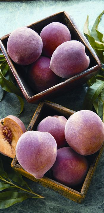 Grow Your Own Peach Trees! (Hint, the pit is not the seed - who knew?!)