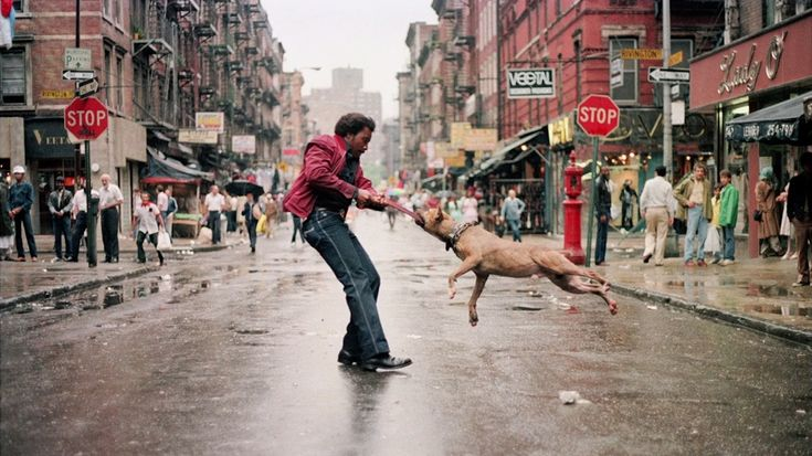 I see a little struggle between the dog and the man. The people don't seem to notice as if this is normal for a man and a dog fight over something in the middle of the street. The dog seem mad as well as the man. This shows strength between two different species.