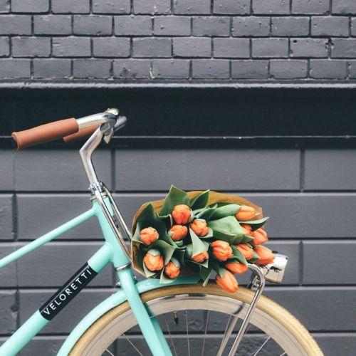 Beautiful shot: mint bicycle, orange tulips, gray wall