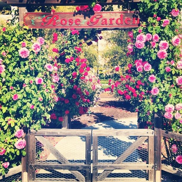 35 Best Barona Creek Golf Club Images On Pinterest