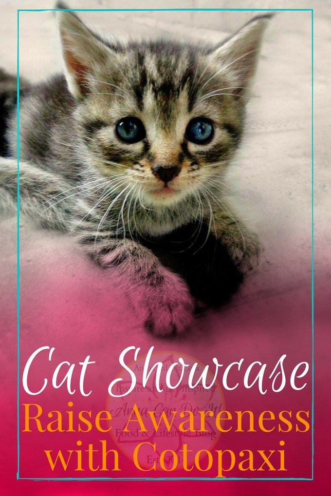 Cat Showcase Raise Awareness with Cotopaxi Cats