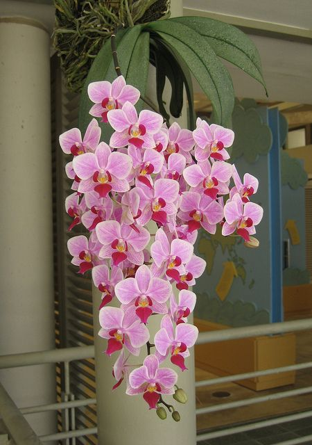 Beautiful rainforest orchid