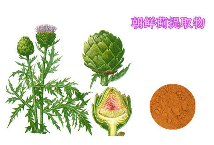 1000g Artichoke Extract Powder/Antioxidan/ Liver Protection Product/ free shipping