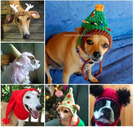 Crochet Pattern For A Hat For A Dog : 706 best images about Crochet - for Pets on Pinterest ...