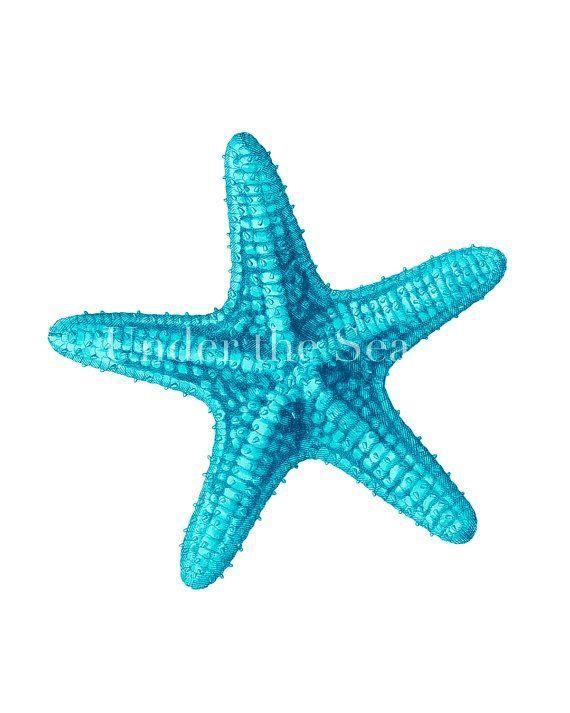cute starfish clip art - HD1200×1500