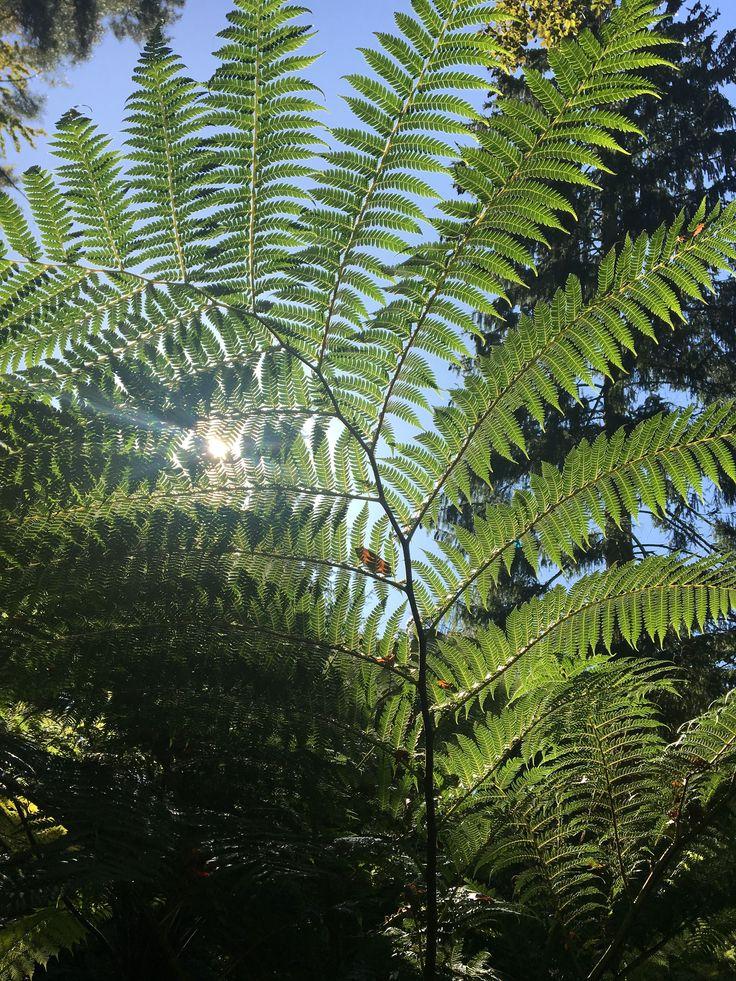 Farn Urtumlicher Farn Im Botanischen Garten In Munster In 2020 Plant Leaves Plants Leaves