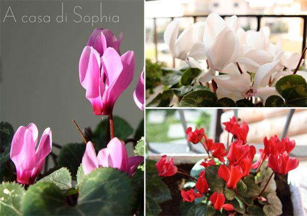 Idee e spunti per i piccoli balconi | A casa di Sophia