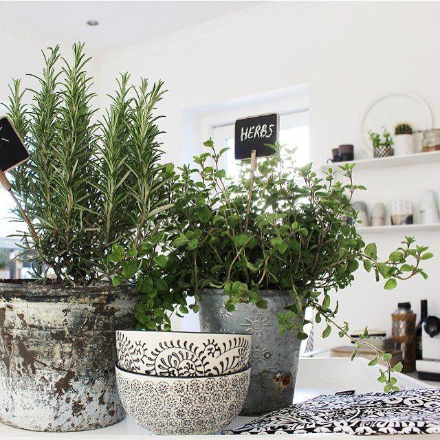 Herbs hos Skovbon