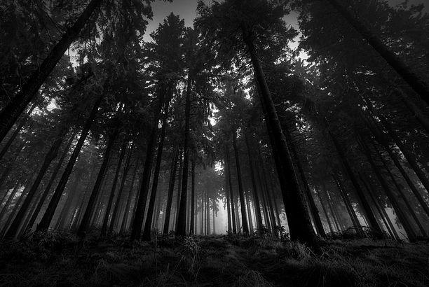 «Το δάσος με τα μαύρα δέντρα»: Μια ιστορία που πρέπει να διαβάσουν όλοι οι γονείς!
