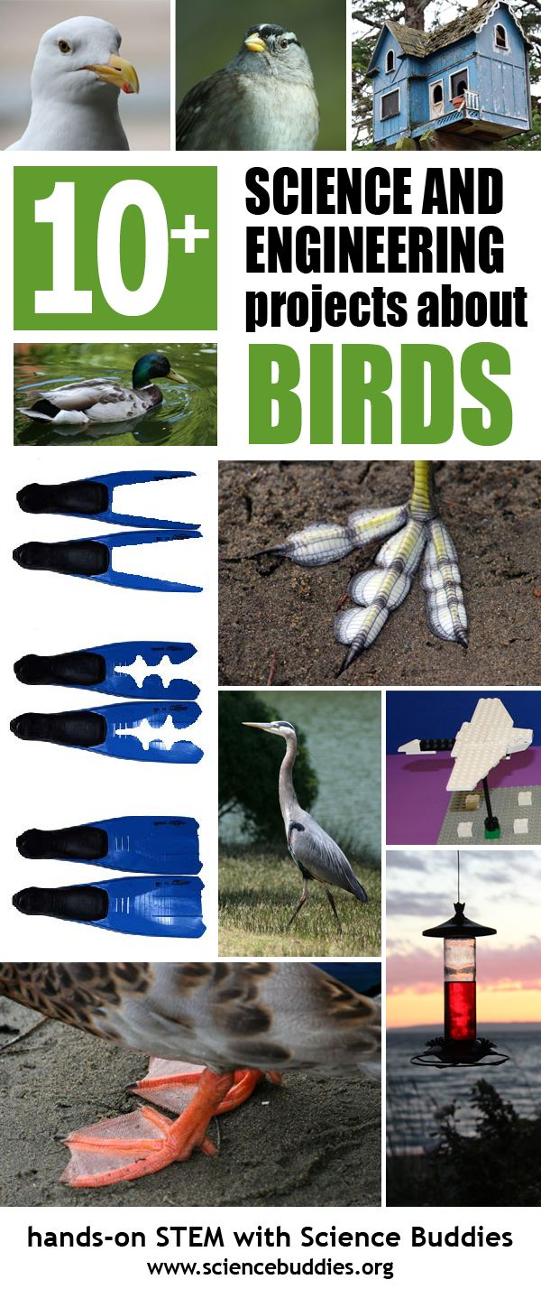 best images about k science project ideas spark new awareness of birds or encourage a young birder related science projects and