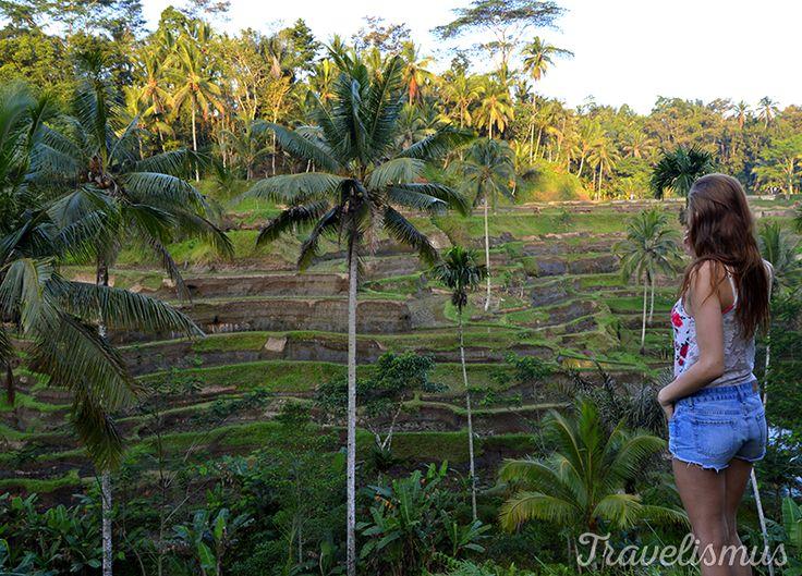 Rice fields in the villageTegallalang, Bali