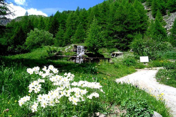 В Валле д'Аоста насчитывается целых четыре альпийских ботанических сада, что, позволяет судить об отношении администрации региона к природе и, в особенности, защите её уникальной флоры.