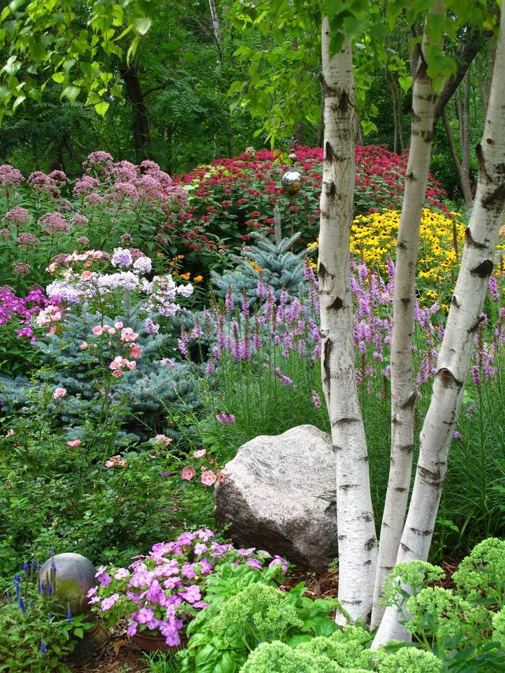 flowering garden with silver birch - oh how pretty.....I've tried planting around my birch trees, but there are too, too many roots to even dig an adequate hole in which to plant. :(