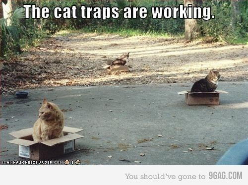 How to capture a cat.  So true !: Cats, Cat In Boxes, Cardboard Boxes, Too Funny, I Love Cat, Cat Traps, So Funny, Cattraps, Animal