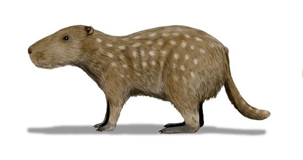 22.) Josephoartigasia: This capybara-like animal was the biggest rodent on the planet, weighing up to 1000kg.